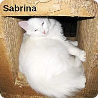 Domestic Longhair Cat for adoption in San Ysidro, California - Sabrina