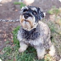 Adopt A Pet :: Vasquez - San Diego, CA