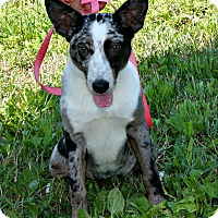 Adopt A Pet :: Charlotte - Lebanon, CT