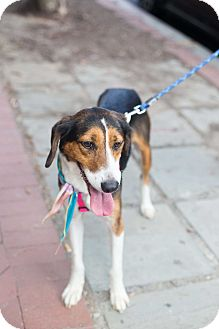 Hound (Unknown Type) Mix Dog for adoption in Washington, D.C. - Penny