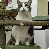 Adopt A Pet :: Gracie - Elyria, OH