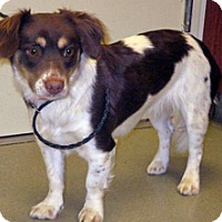 Adopt A Pet :: Anna - Wildomar, CA