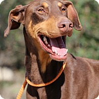Adopt A Pet :: Rudolph - Fillmore, CA