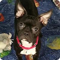 Adopt A Pet :: Cassie- Adoption Pending! - Lisbon, OH