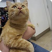 Adopt A Pet :: Ralph - Cody, WY