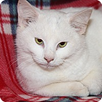 Adopt A Pet :: Yuki (Neutered) - Marietta, OH