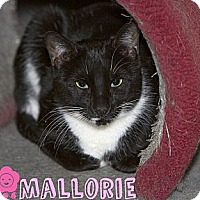 Adopt A Pet :: Mallorie - River Edge, NJ