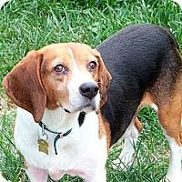 Adopt A Pet :: Tonka - Novi, MI