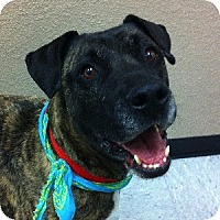 Adopt A Pet :: Doc - Gilbert, AZ