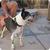 Adopt A Pet :: Tigger - Temecula, CA