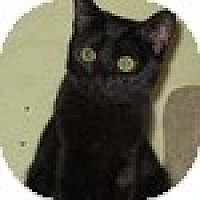 Adopt A Pet :: Emma - Vancouver, BC