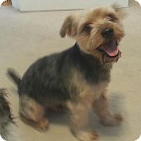 Adopt A Pet :: Reggie - Orlando, FL