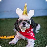 Adopt A Pet :: Ducky - Los Angeles, CA