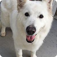 Adopt A Pet :: Sage - Boise, ID