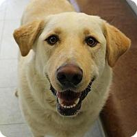 Adopt A Pet :: Bodey - Penngrove, CA