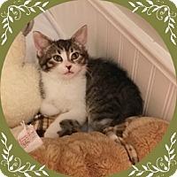 Adopt A Pet :: Leah - Mt. Prospect, IL