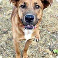 Adopt A Pet :: JASMINE - Westminster, CO