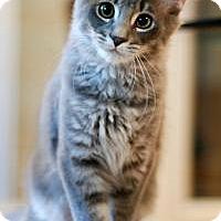 Adopt A Pet :: Tasman - San Carlos, CA