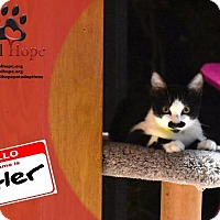 Adopt A Pet :: Kitler - Fort Worth, TX