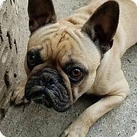 Adopt A Pet :: Bubba - staten Island, NY