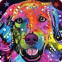 Adopt A Pet :: Sherlock - Coming Soon - Palm Coast, FL