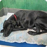 Adopt A Pet :: *NILES - Upper Marlboro, MD