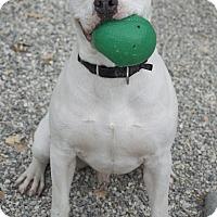 Adopt A Pet :: Clarence - Los Olivos, CA