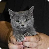 Adopt A Pet :: Maya - Washington, DC