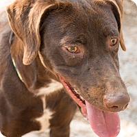 Adopt A Pet :: CC - Daleville, AL
