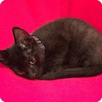 Adopt A Pet :: Bo - Scottsdale, AZ