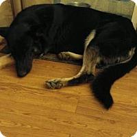Adopt A Pet :: Jake - Tonopah, AZ
