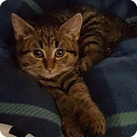 Adopt A Pet :: Comet - Freeport, NY