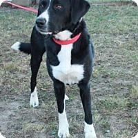 Adopt A Pet :: Hope - Newark, NJ