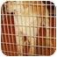 Photo 2 - Golden Retriever/Labrador Retriever Mix Puppy for adoption in Provo, Utah - Comet