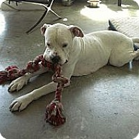 Adopt A Pet :: Pancho - miami beach, FL