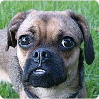Adopt A Pet :: Bree - Mocksville, NC