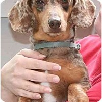 Adopt A Pet :: Freckles - Garden Grove, CA