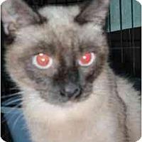 Adopt A Pet :: Boba - Pasadena, CA