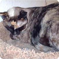 Adopt A Pet :: Kiroro - El Cajon, CA