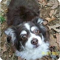 Adopt A Pet :: Ladybug - Richmond, VA