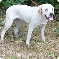 Adopt A Pet :: Amy - Oviedo, FL