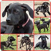 Adopt A Pet :: JORDI PINK - Davenport, FL