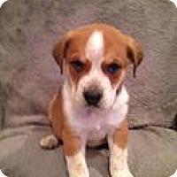 Adopt A Pet :: Ralphie - Marlton, NJ