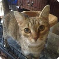 Adopt A Pet :: Elizabeth - McDonough, GA