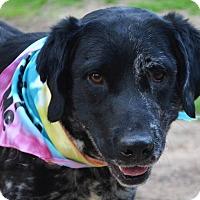Adopt A Pet :: Jett - Burleson, TX