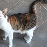Adopt A Pet :: Penny - Seguin, TX