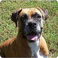 Adopt A Pet :: Arwen - Brentwood, TN