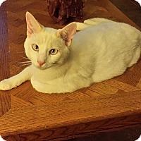 Adopt A Pet :: Carver - Mesa, AZ