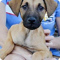 Adopt A Pet :: Lilith - San Diego, CA