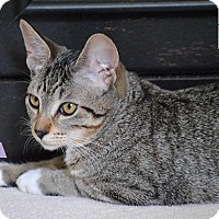 Adopt A Pet :: Ava - Sweet Girl! - Huntsville, ON